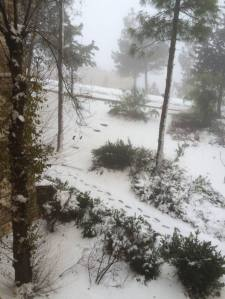 שלג בקרית ארבע. צילום: אמא שלי.