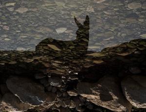 השתקפותו של השמאל הישראלי במי-התקופה תמונה של הצלפם שי כנעני :מהאתר http://photolight.co.il/show_photo/727742