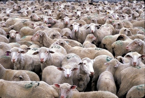 לעדר כבשים נעשינו - חיי בהמה נטולי עבר ועתיד?